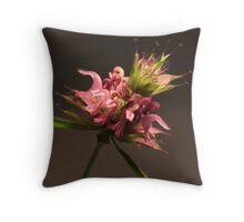 Monarda citriodora Throw Pillow
