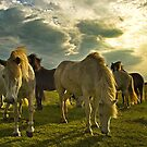 Iceland - my best friends by Patrycja Makowska