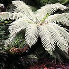 Lace Umbrella - large tree fern spreading its canopy by Rhonda F.  Taylor