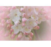 Delicate blossoms Photographic Print
