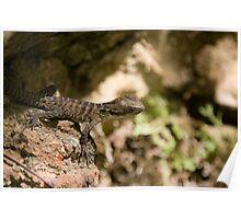 Baby Australian Easter Waterdragon Poster
