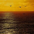 FREEDOM by Scott  d'Almeida