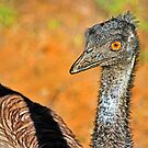 Ostrich Girl With Attitude by miroslava