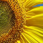 Sunflower Detail by RobynHButler