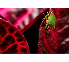 Colourblind - a lost insect Photographic Print