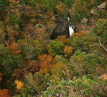 Cedar Falls Overlook by Lisa G. Putman