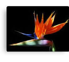 Bird of Paradise (Strelitzia reginae) Canvas Print