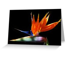 Bird of Paradise (Strelitzia reginae) Greeting Card