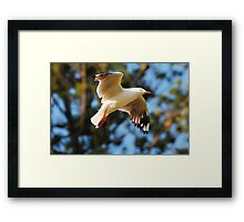 COASTAL SEEKER Framed Print