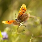 Morning impression with orange butterfly by JBlaminsky