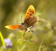 Morning impression with orange butterfly by JBlaminsky