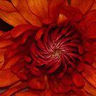 Pinwheel by artsthrufotos