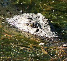 Yellow Waters Croc by Courtney McIntyre