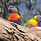 Scarlet Parrots - For Calender 2010 by Steven  Sandner