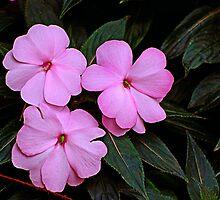 Triple Pink by Rodney55