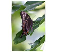 Beautiful Butterfly Home Poster