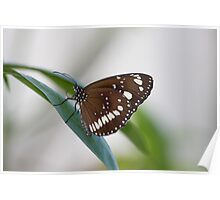 Common Crow Butterfly I Poster