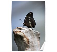 Common Crow Butterfly III Poster