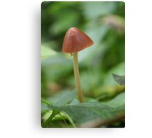 Fungal fly (not an existing species) Canvas Print