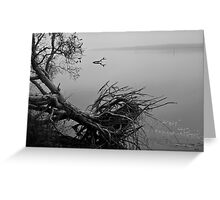 Fallen Tree in Black and White Greeting Card