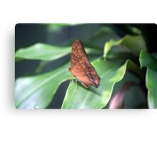 The Cruiser Butterfly Canvas Print