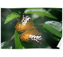 One Orange Lacewing Butterfly Poster