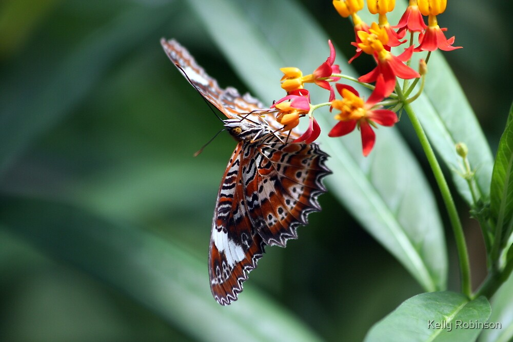 Orange Lacewing Hanging Tight by Kelly Robinson
