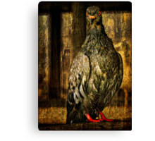 Feathered Finery Canvas Print