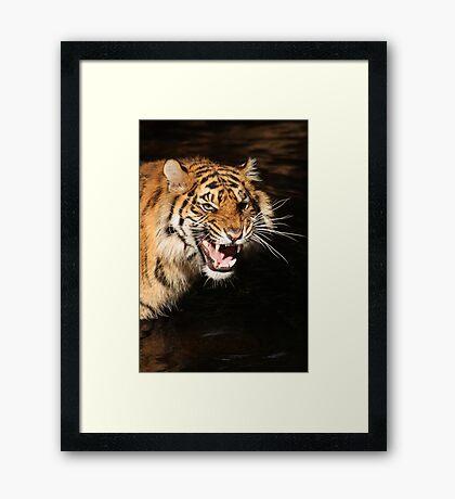 Tiger: Annoyance Framed Print