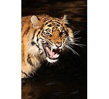 Tiger: Annoyance Photographic Print
