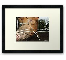 Pig in a poke Framed Print