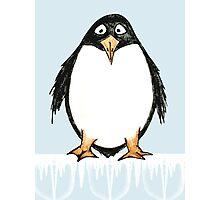 Zoology Series - Penguin Photographic Print