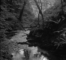 Lydford Gorge by MadTogger
