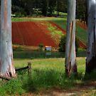 Colorful Farm by rjpmcmahon