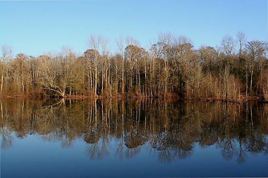 Winter Pond by JGetsinger
