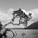 Leaning Tree in Black and White by pennyswork