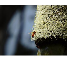 Bee Photographic Print
