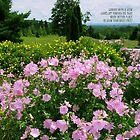 Card #3 - A Garden View by L J Fraser