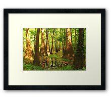 Summer Swamp Framed Print