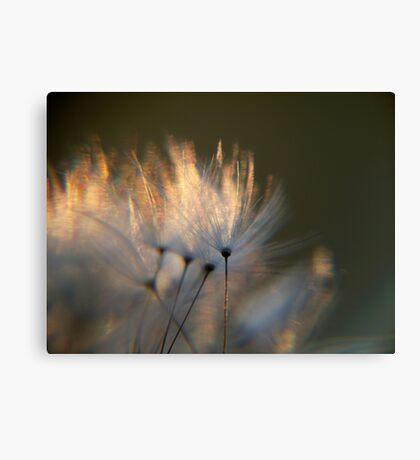 Dandelion Flow Canvas Print
