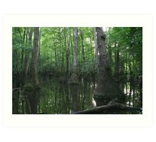 Tupelo Swamp Art Print
