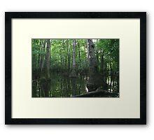 Tupelo Swamp Framed Print