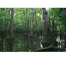 Tupelo Swamp Photographic Print