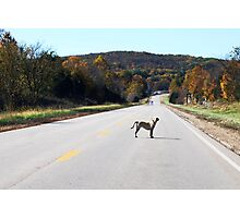 Get Out of the Road Dog! Photographic Print