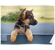 Puppy Profile Poster