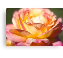 Rest in piece my friend - All Proceeds to Canadian Breast Cancer Foundation - Peace Roses Canvas Print