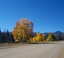 An empty country road by corinaprice