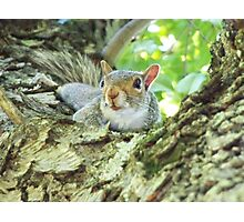 Gray squirrel trapped in a tree. Photographic Print