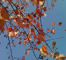 Autumn Leaves Abstract (1) by SylviaS