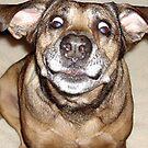 Funny Mattie 3 by Samitha Hess Edwards